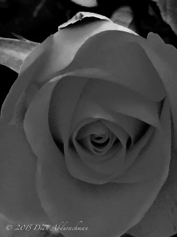 rose5nov14f