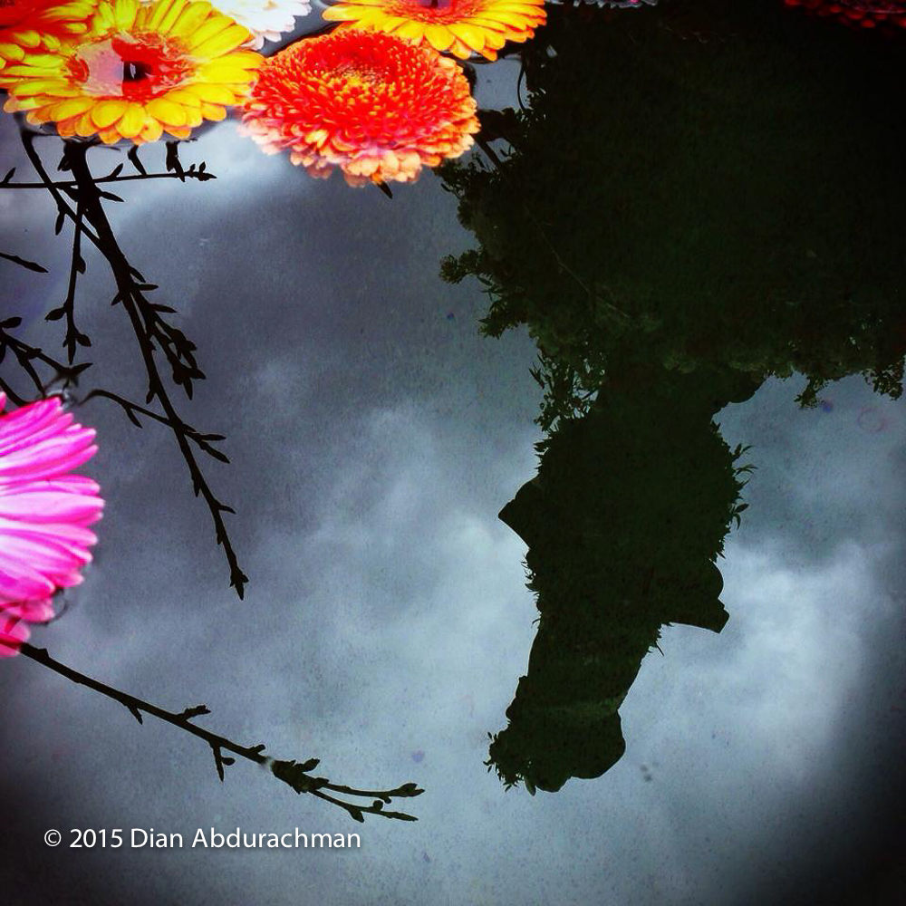 flowerreflection